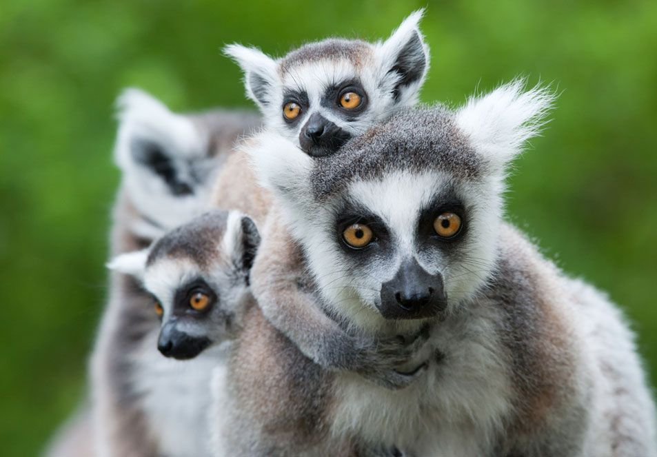 Wild Planet Adventures | Madagascar | Ultimate Weird